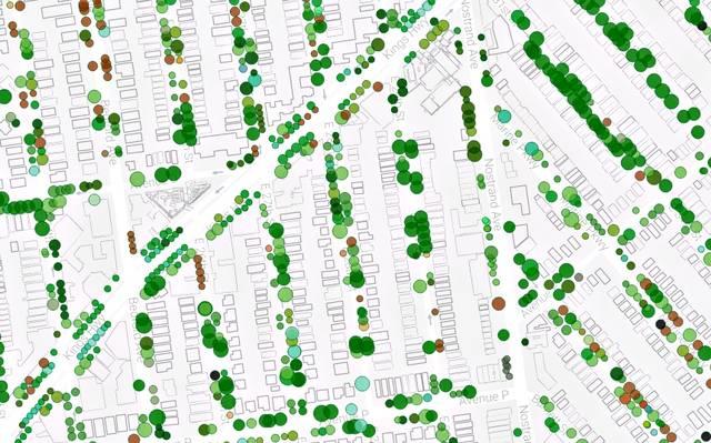 Nova York mapeou todas as suas árvores. E é possível saber a importância de cada uma delas